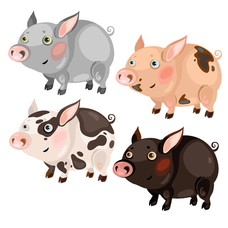 Four spotted cartoon pigs, grey, pink, brown and black, vector animals on white background