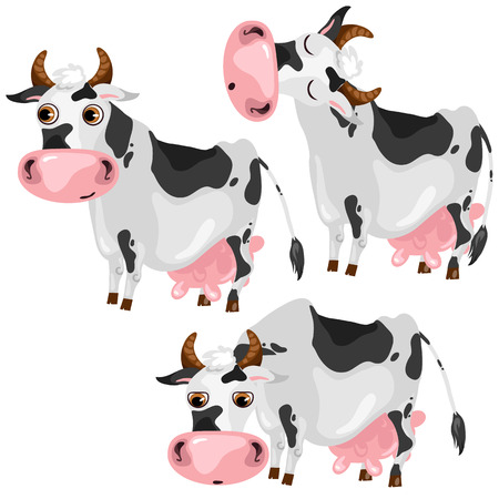 pet breeding: White spotted cow in three poses, vector animals on white background