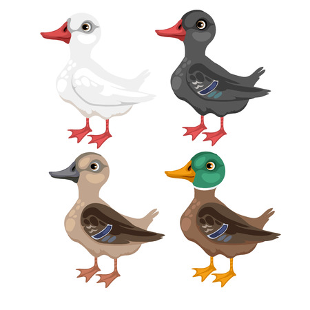 Cartoon duck in different colors, vector animals on white background