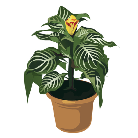 indoor bud: Decorative yellow flower in pot, vector flowers isolated, decor Illustration