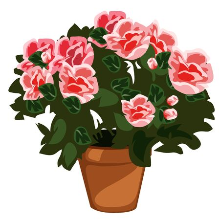 Decorative pink flowers in pot, vector bouquet isolated, decor