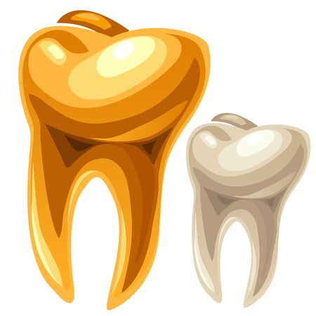 Gold and white human tooth, vector illustration isolated