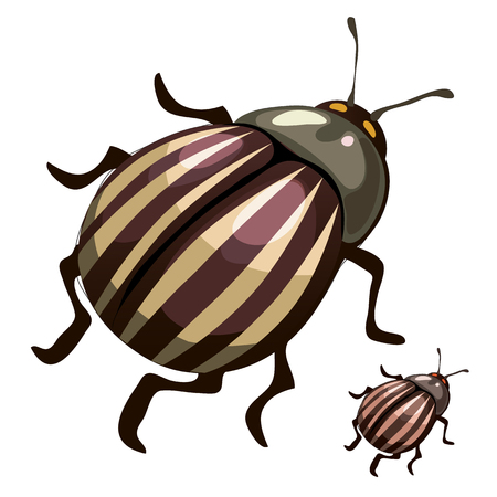 harm: Striped colorado potato beetles, pests of plants, vector isolated Illustration