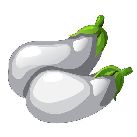 picked: Two white eggplants picked from garden, vector vegetables