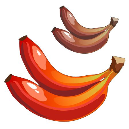 mixed fruit: Delicious ripe bananas mixed colors, brown and red, vector fruit
