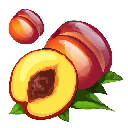 intact: Ripe delicious round brown peach, vector fruit