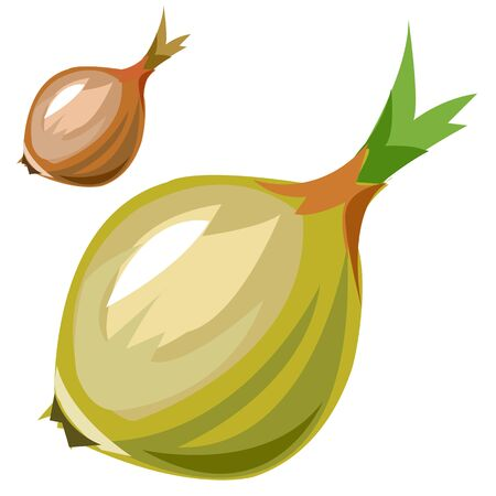 poignant: Ripe delicious onion closeup in cartoon style, vector vegetables Illustration