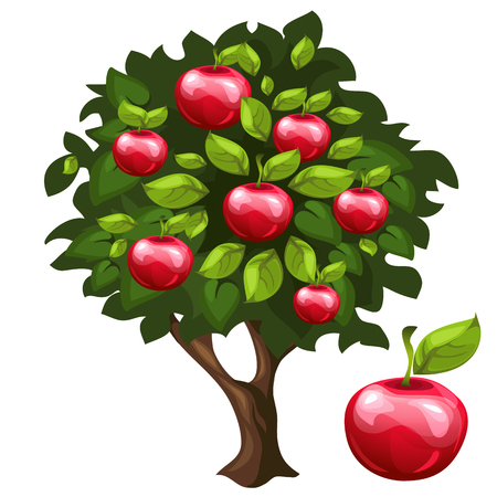 appletree: Apple tree with ripe fruits in cartoon style, vector background