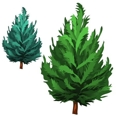Green and blue spruce in cartoon style on white background Illustration