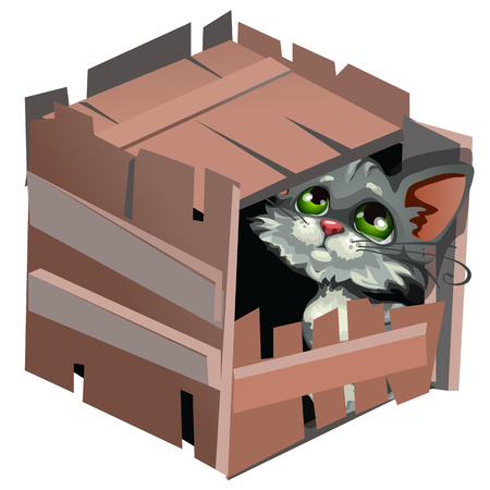 hideout: Sad cartoon gray kitty in wooden box,  animal isolated