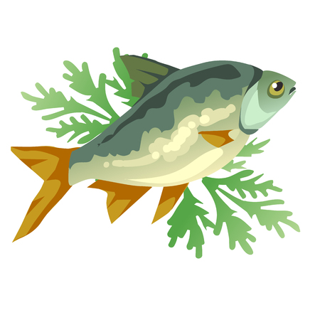 Cooked fish with dill, icon food isolated