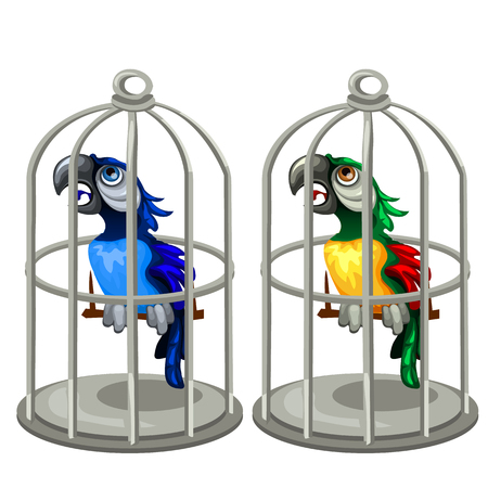 birdcage: Two colorful tropical parrots in birdcage, vector isolated