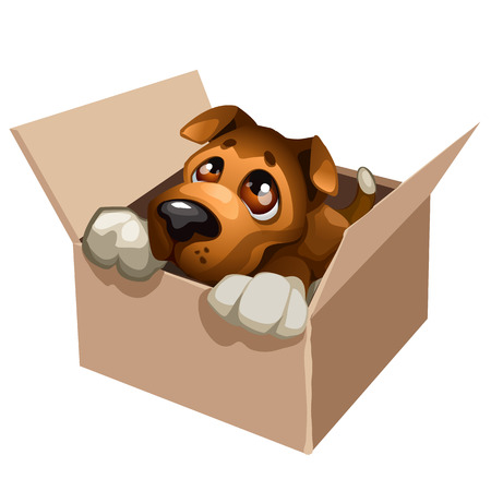 Sad stray dog cute in a cardboard box, , vector isolated