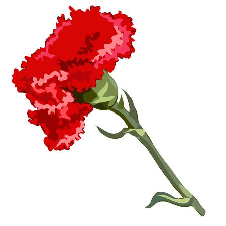 single flower: Single flower red carnation, vector flowers