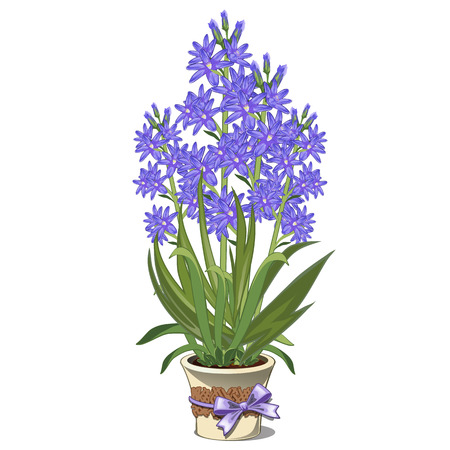 Bouquet of blue lilies in glass vase. Vector illustration isolated