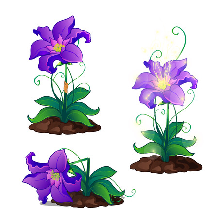 Bright purple magic flowers grows in ground, vector illustration isolated