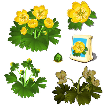 wilting: Seeds in bag and growth stages of yellow flowers, six icons isolated. Vector illustration