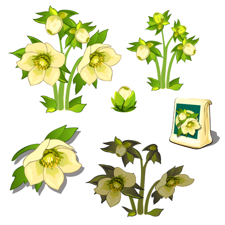 wilting: Seeds, stages of growth and wilting yellow flowers, six icons isolated. Vector illustration Illustration