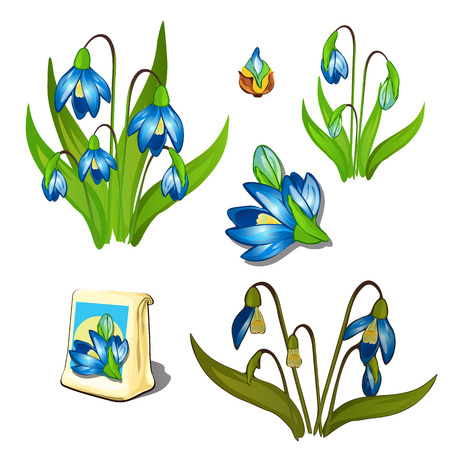 wilting: Seeds, stages of growth and wilting blue wildflowers, six icons isolated. Vector illustration
