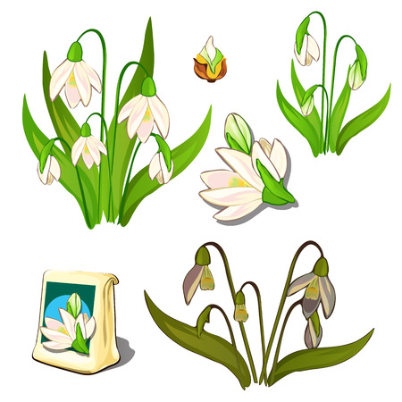 wilting: Seeds, stages of growth and wilting white wildflowers, six icons isolated. Vector illustration