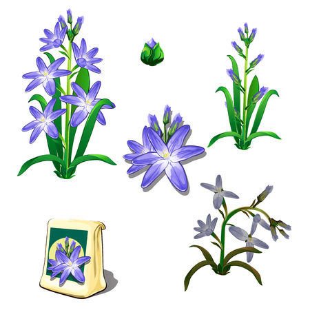 wilting: Seeds, stages of growth and wilting purple flowers, six icons isolated. Vector illustration Illustration