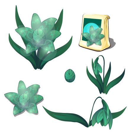 burgeon: Seeds, stages of growth and wilting green flowers, six icons isolated. Vector illustration