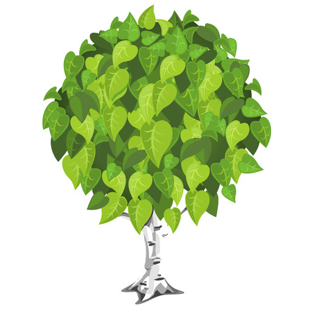 lush foliage: Birch tree with lush green foliage. Vector illustration on white background Illustration