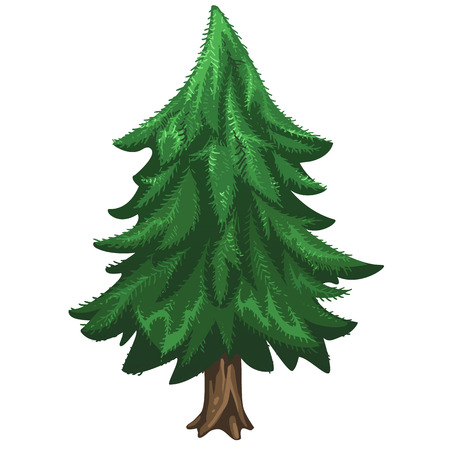 coniferous: Coniferous pine tree without ornaments, Christmas symbol. Vector illustration on white background Illustration