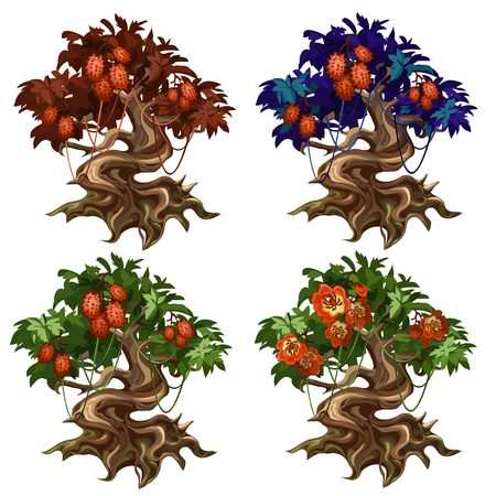 bark: Magical trees with unusual fruits and flowers. Vector plant on wite background. Illusetration for your design needs