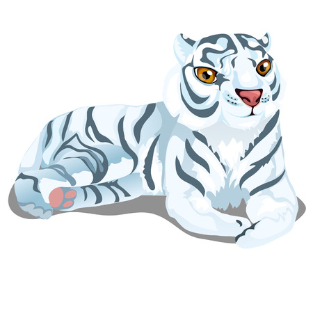 bengal: Striped white Bengal tiger in cartoon style on white background. vector illustration isolated