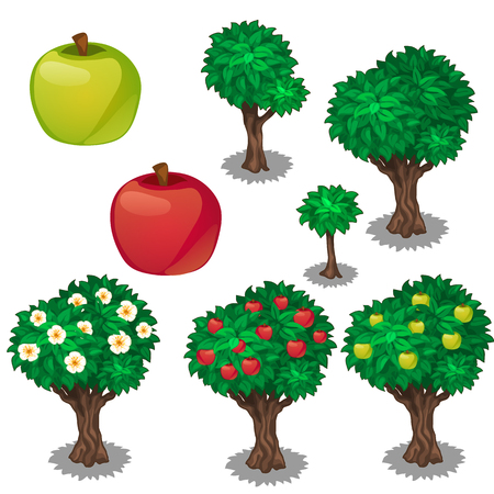 Planting and cultivation of green and red apple. Vector illustration of appletree on a white background