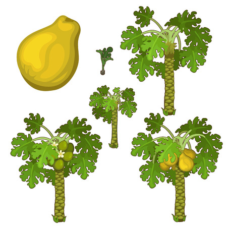 Planting and cultivation of yellow pear. Vector illustration of pear tree on a white background Ilustração