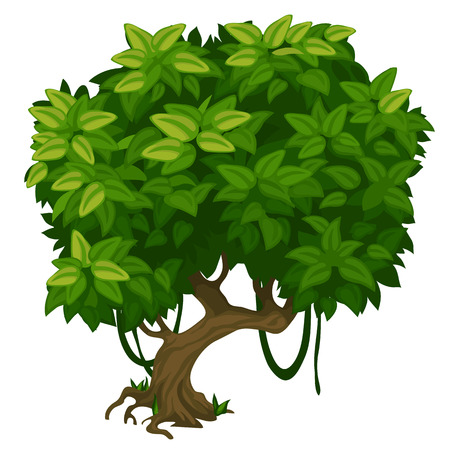 lush foliage: Green tree with lush foliage closeup on a white background. Vector illustration for your design needs