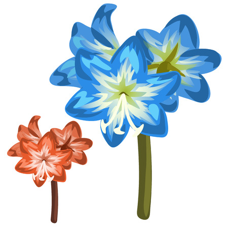 Blue and red flower closeup on white background. Vector illustration