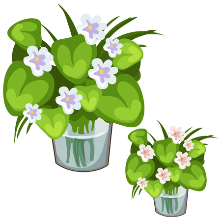 White flowers with large green leaves in glass vase. Symbol of nature and holidays. Sector illustration on white background for your design needs