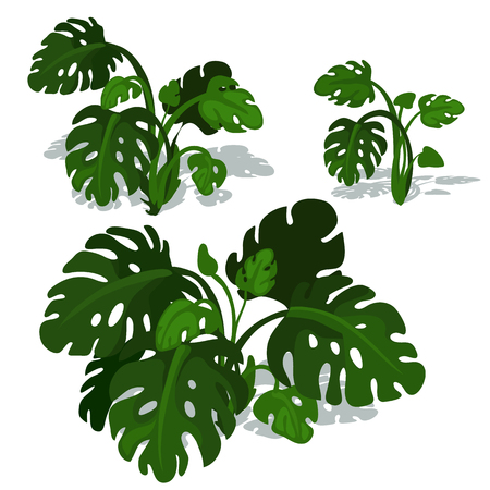 uncultivated: Dark green bushes of fern on white background. Vector illustration on white background for your design needs Illustration