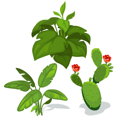 Cactus with flower and large green leaves. Vector illustration on white background for your design needs