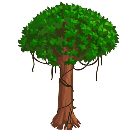 lush foliage: High tropical tree with lush green foliage. Vector illustration on white background for your design needs Illustration