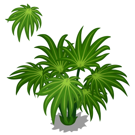 Green bush tropical plants on a white background. Vector illustration for your design needs. Series of plants