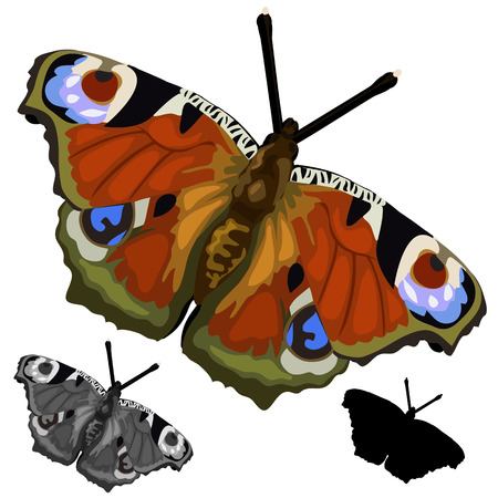 forewing: Beautiful colored butterfly on a white background. Insect isolated. Vector illustration for your design needs