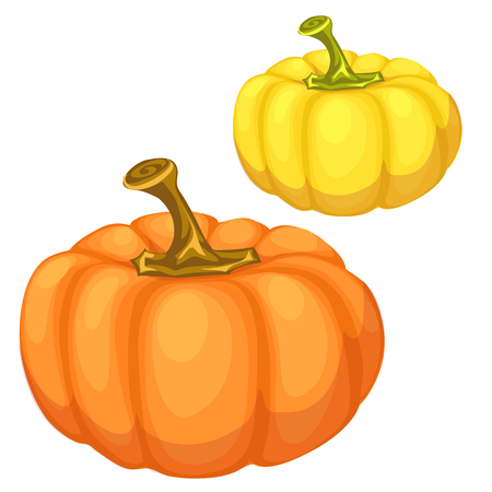 Yellow and orange pumpkin on a white background. Vector illustration of vegetables