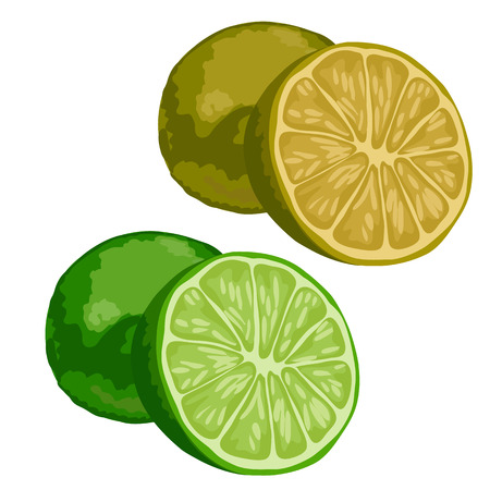Green whole and half lime on white background. Vector isolated fruit Illustration