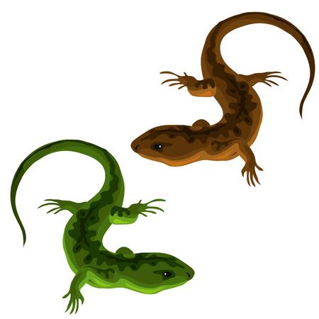 lucertole verdi e marroni su uno sfondo bianco Vettoriali