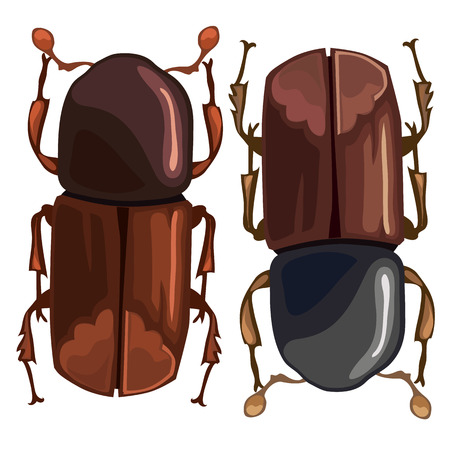 coleoptera: Black-brown beetle on a white background. Vector