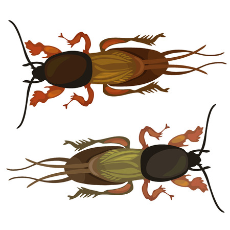 Two cockroach on white background. Vector insect