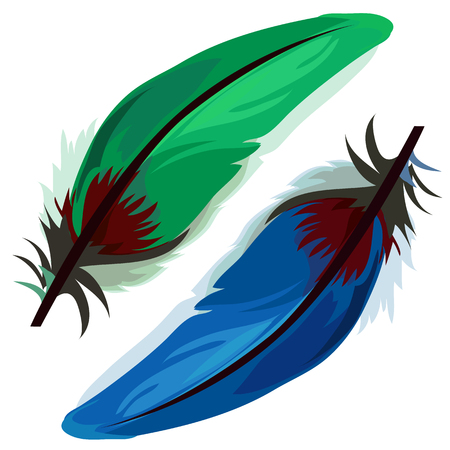 quills: Blue and green bird feather on white background