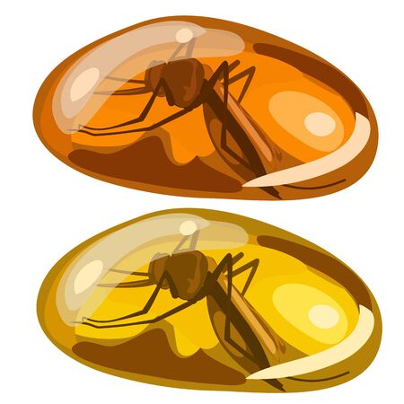 Ancient insect fly frozen in amber, rare stone
