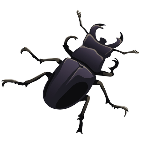coleoptera: Black beetle stag on a white backgroun. Vector illustration isolated on white background