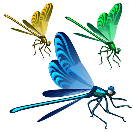 Yellow, green and blue mosquito in cartoon style Illustration