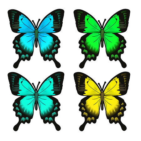 Set of four beautiful butterfly. Insect isolated